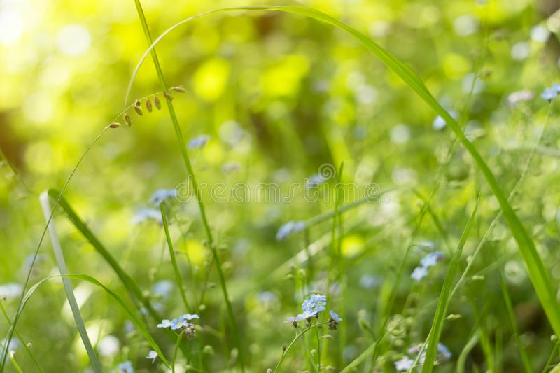 Green grass, plants and flowers on meadow close up, macro in sunlight. Abstract blurred nature background stock photo