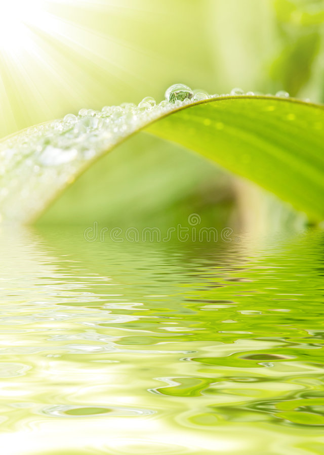 Download Green grass with raindrops stock photo. Image of close - 6330126