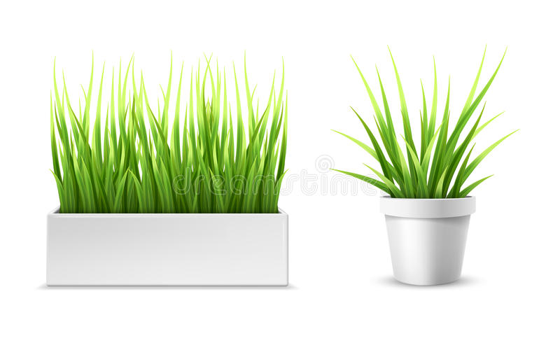 Green grass in a rectangular and round pot royalty free illustration