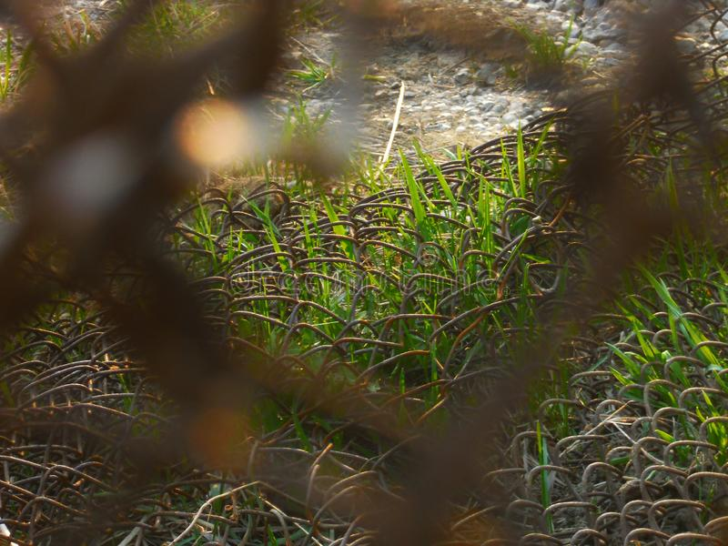 Green grass and rusty metal mesh fence stock photo