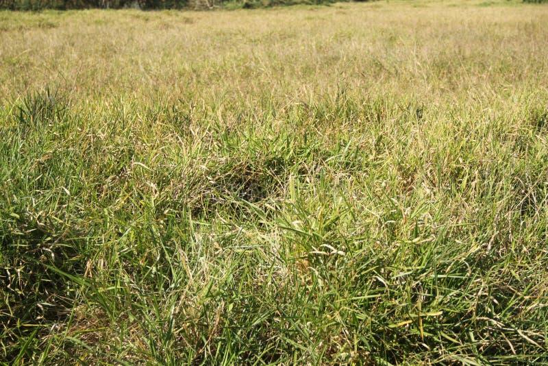 Green grass,  São Caetano do Sul. Green grass overview,  Sao Caetano do Sul, Sao Paulo, Brazil stock photography