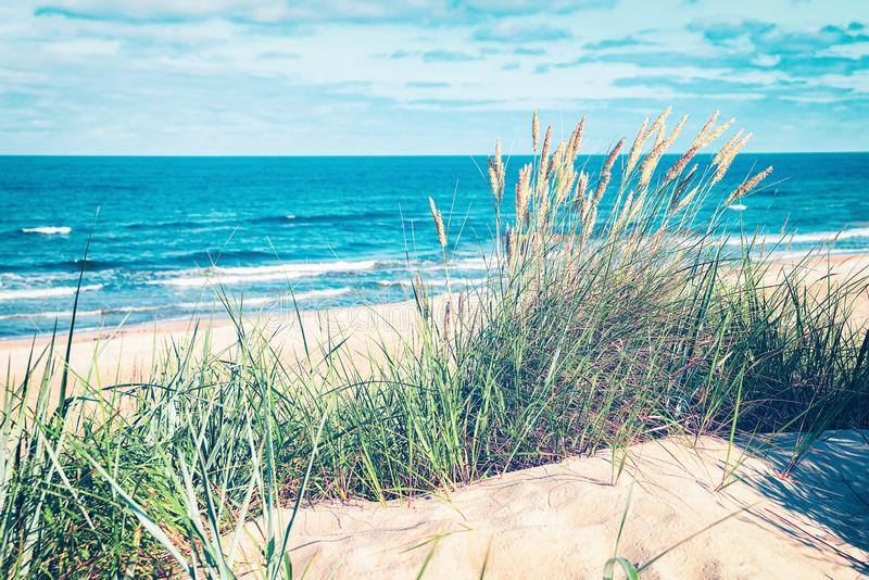 Green grass in sand dune at Baltic Sea in Palanga. Green grass in the sand dune at the Baltic Sea in Palanga resort, Lithuania stock photos