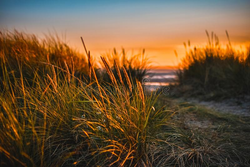 Green Grass Beside Sea royalty free stock photography