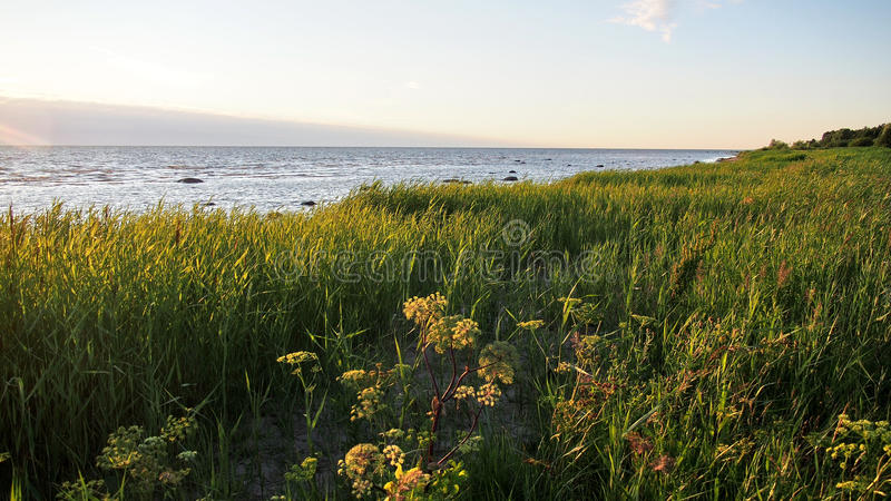 Green grass on sea coast stock photos