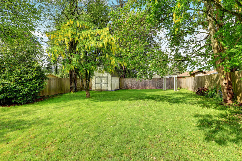 Green grass and a shed in empty fenced back yard stock photo