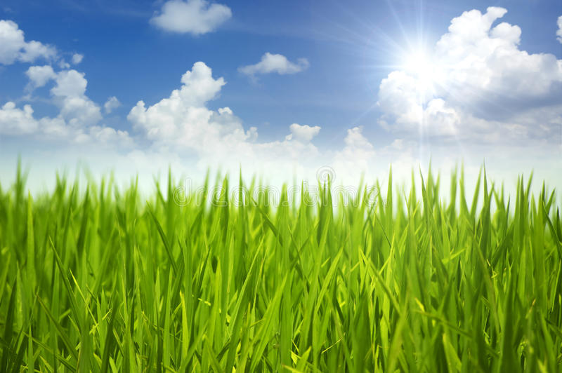 Green grass and sky. In a morning stock photos