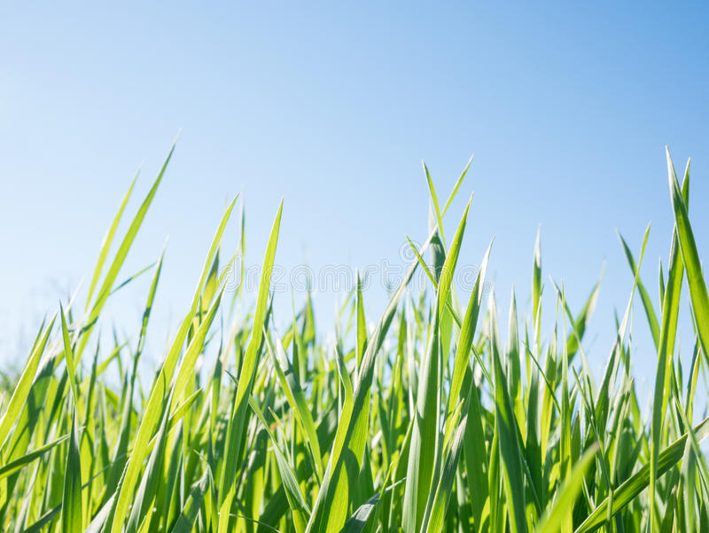 Green grass and sky. A green grass and sky royalty free stock photos