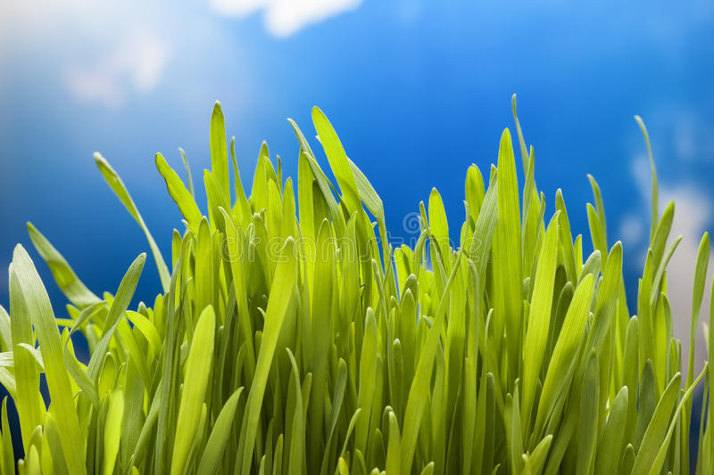 Green grass on sky. The green grass on sky background stock images