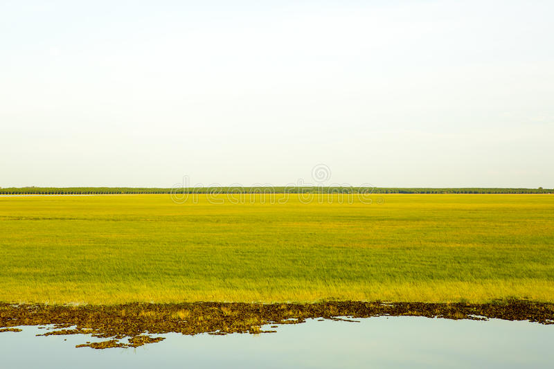 Green grass and sky. Background royalty free stock photography