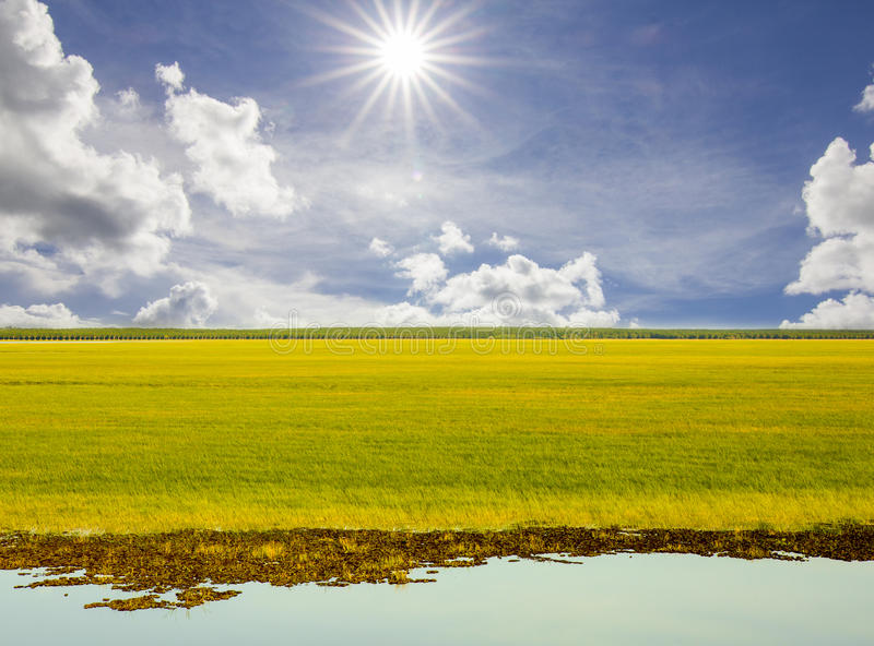 Green grass and sky. Background royalty free stock image