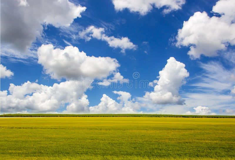 Green grass and sky. Background stock images