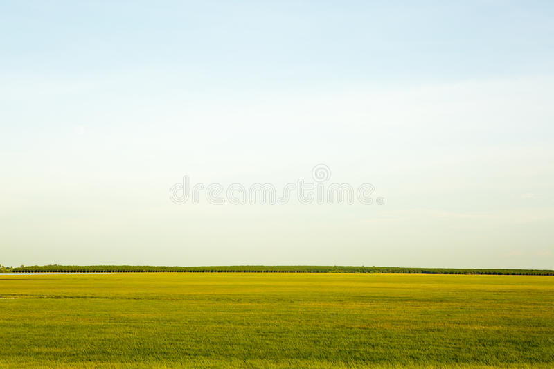 Green grass and sky. Background royalty free stock photos