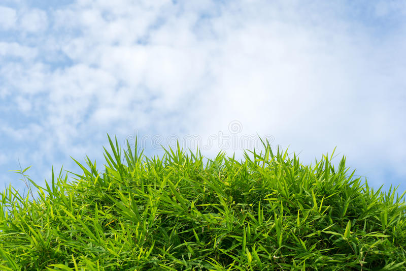 Green grass and sky. Close up of green grass and sky forming background stock images