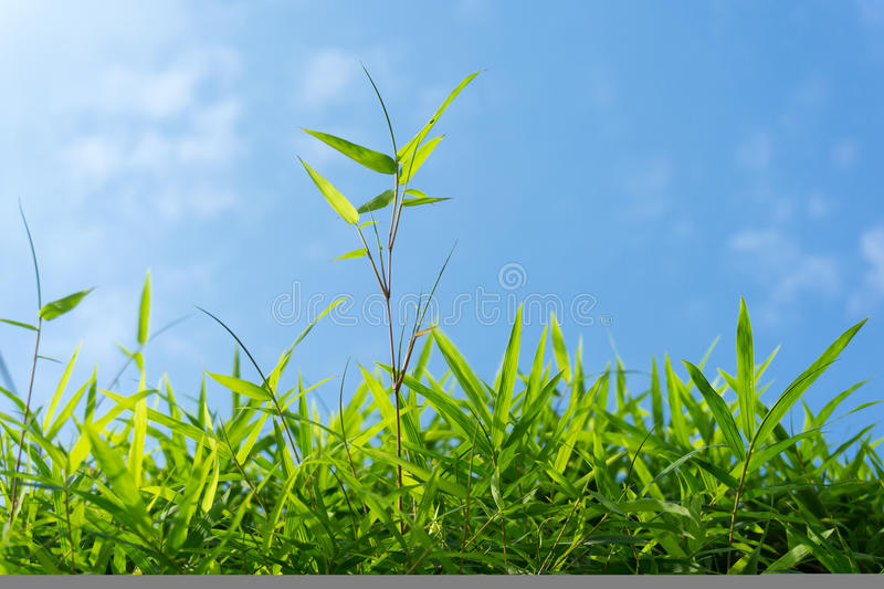 Green grass and sky. Close up of green grass and sky forming background royalty free stock photography