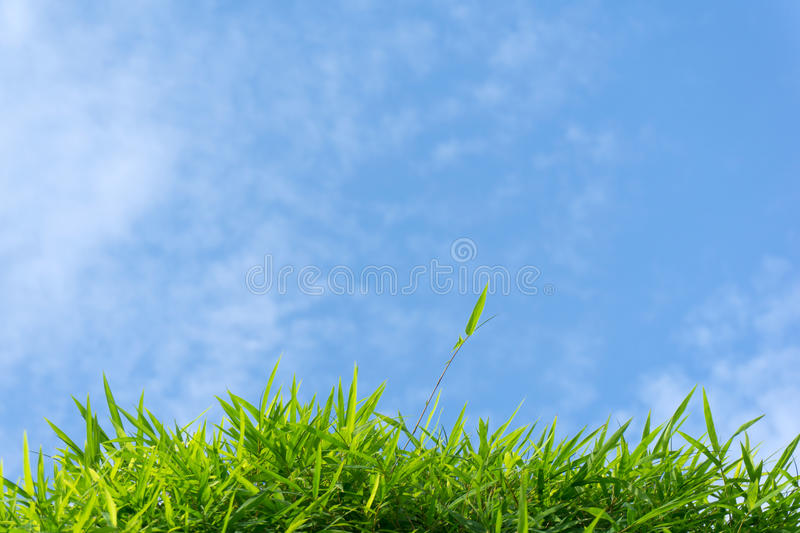 Green grass and sky. Close up of green grass and sky forming background royalty free stock images