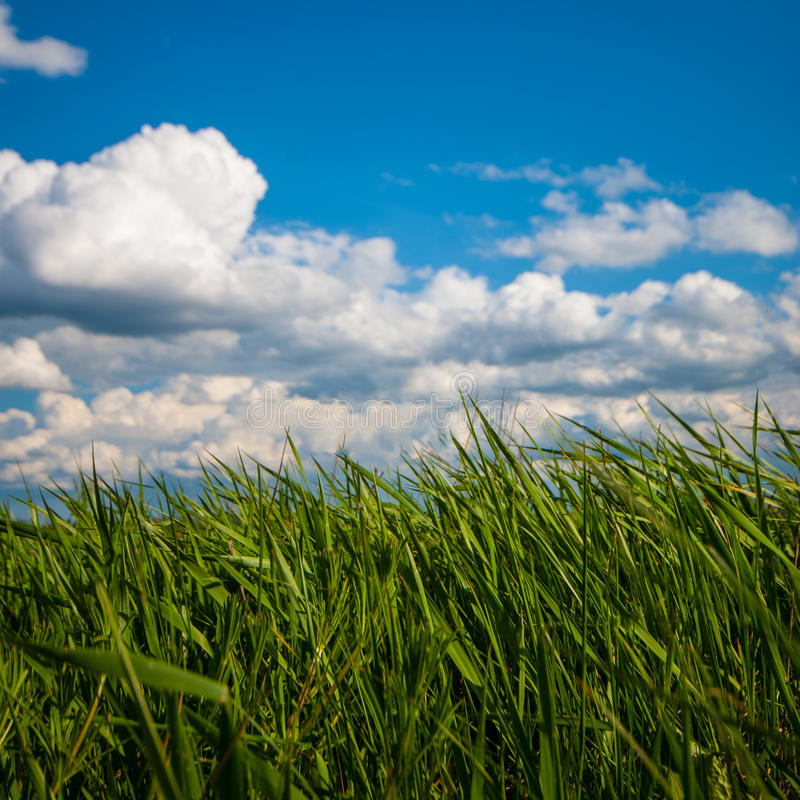 Green grass sky and clouds. Spring day stock photos