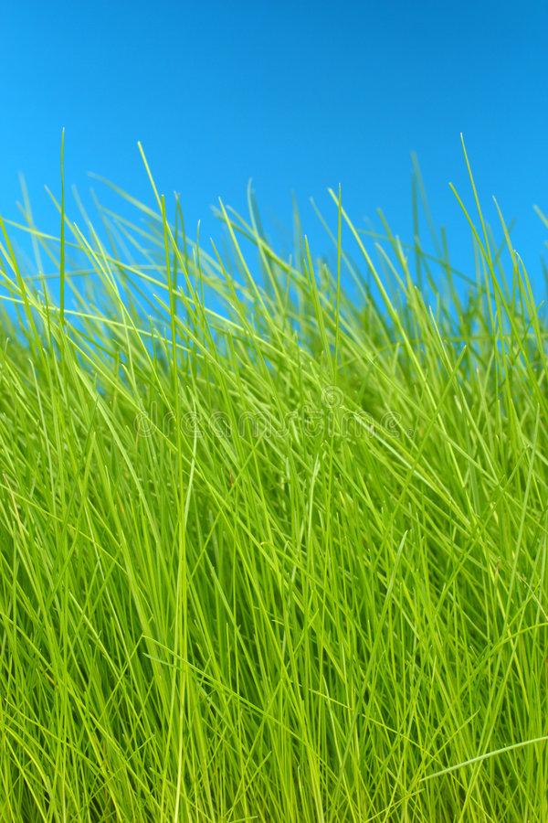 Grass and sky macro. Green grass and blue sky macro stock photography