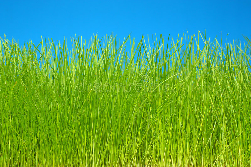 Download Green Grass & Sky Eco-friendly Background Stock Photo - Image: 8778206