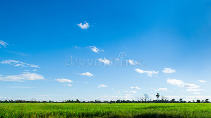 Green grass and sky. Panorama of Green grass and sky royalty free stock photo