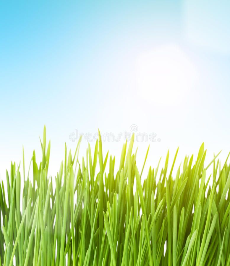 Green grass and sky. With sun royalty free stock images