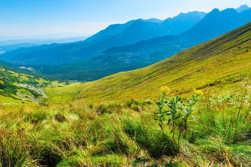Green grass on the slope of the high Tatra Mountains in Zakopane, Poland royalty free stock photos