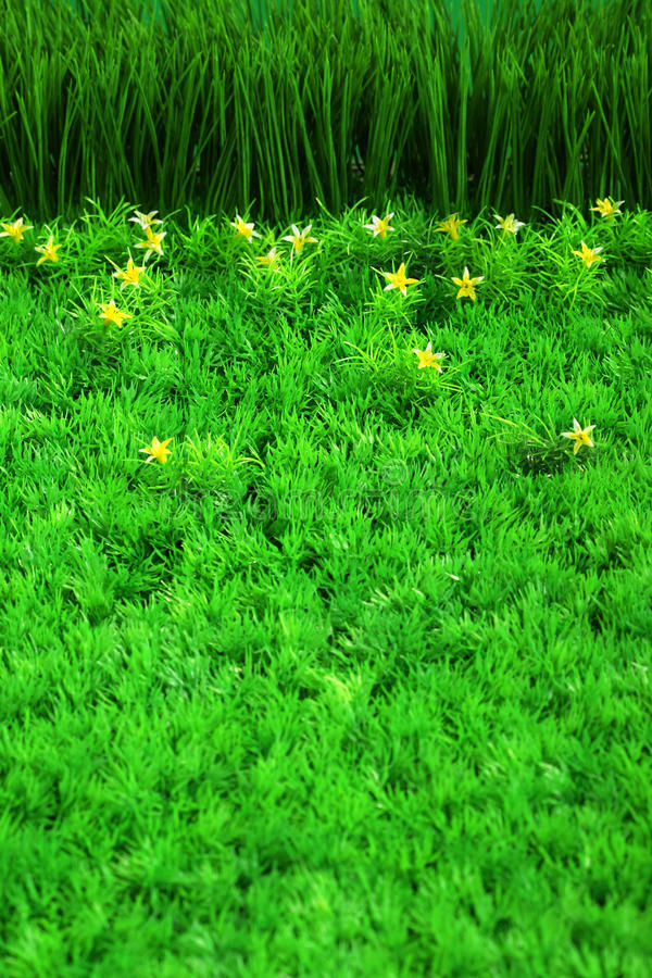 Green grass and small flowers stock images