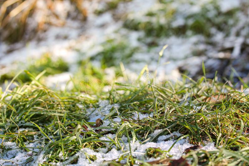 Green grass with snow and fallen leaves in the park. Picture of three seasons - summer, autumn and winter. Sunny day background royalty free stock photo