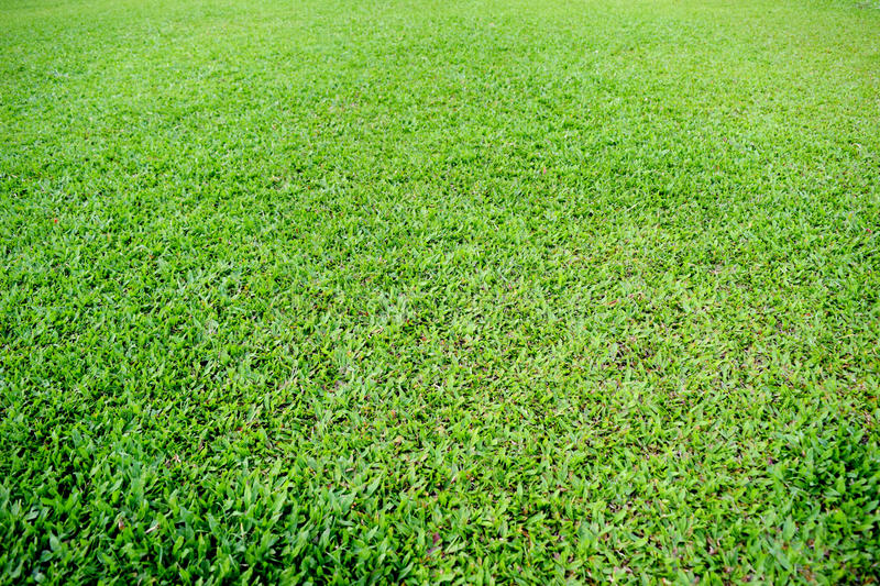 Green grass soccer pitch stock photography