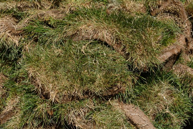 Green grass sod patches. Close up of stack of agricultural green grass sod patches waiting to be installed at construction site royalty free stock images