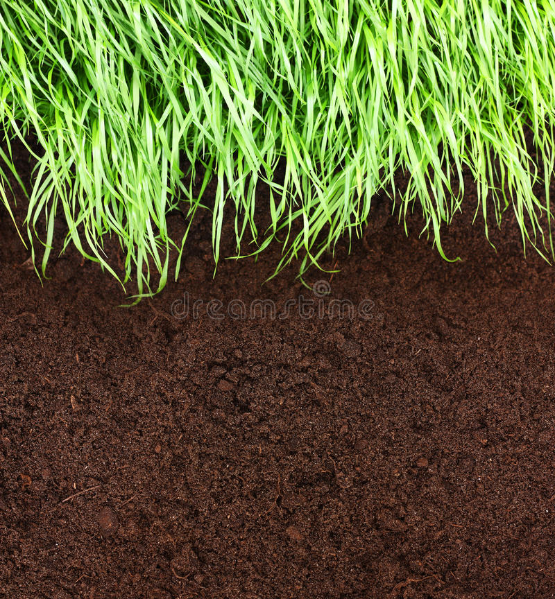 Green grass and soil royalty free stock image