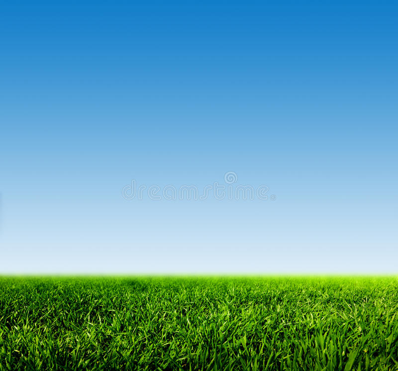 Green grass on spring field against blue clear sky. HD quality, perfect for background, nature theme etc stock photography