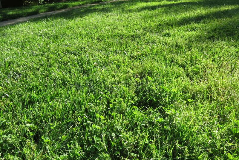 Green Grass in Spring in May stock images