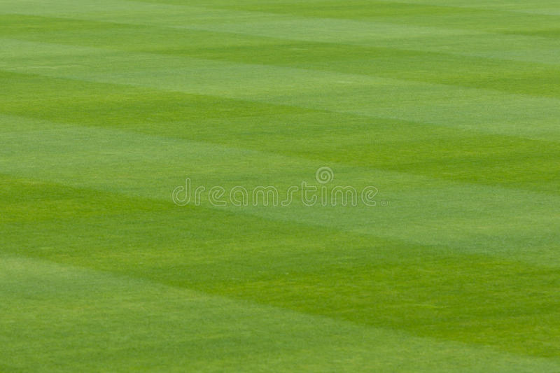 Green grass in a stadium or sports field royalty free stock photography