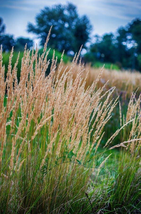 Green grass stem growing outdoors stock photo