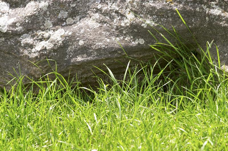 Green grass and stone royalty free stock images