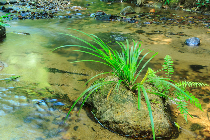 Green grass on stone in stream. Babbling Brook in Green Forest at northern Thailand, Asia stock photography