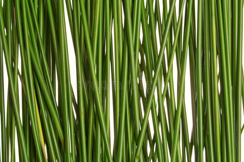 Green grass straws royalty free stock image