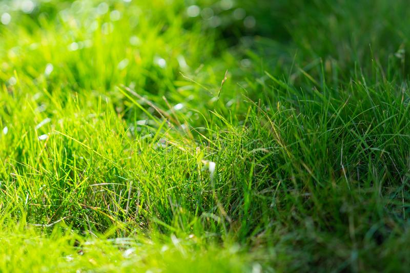 Green grass in summer in the sun and in the shadow stock photos