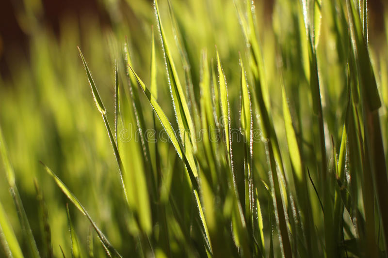 Download Green Grass In The Sun Stock Image - Image: 31473361