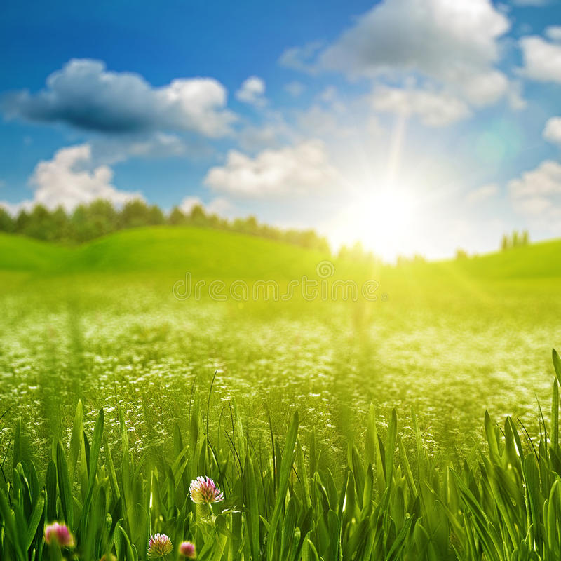 Green grass on the sunny meadow stock photography