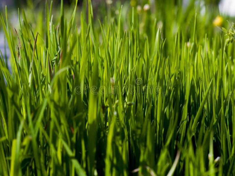 Close up green grass on a sunny spring day stock image