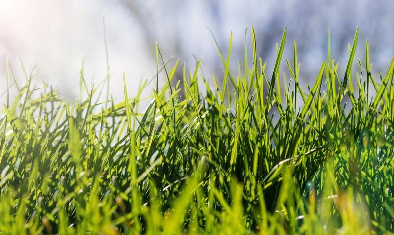 Green grass on a sunny spring day royalty free stock photos