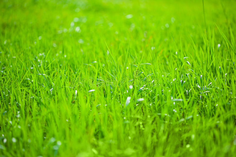 Green Grass In The Sunshine Stock Photo