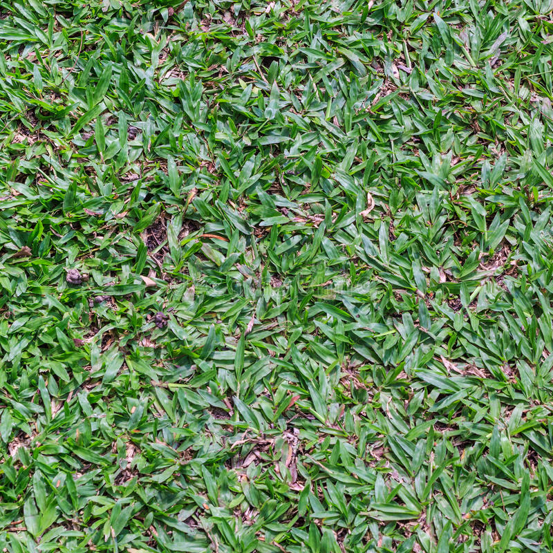 Green grass surface. Dirty green grass surface background stock images