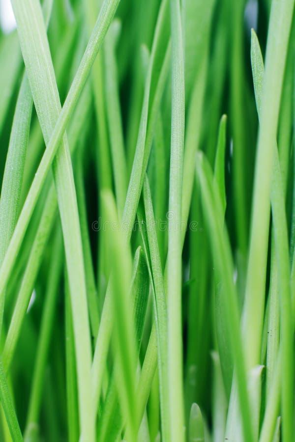 Green grass. Texture. stock photos