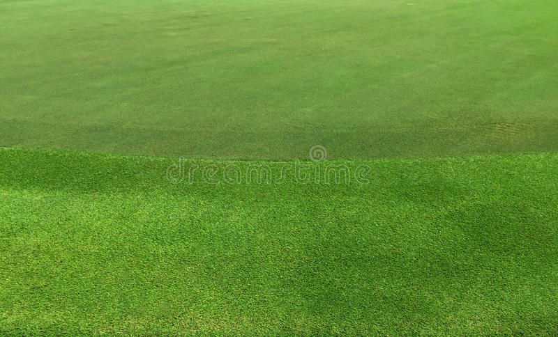 Green grass textured background of golf course. royalty free stock images