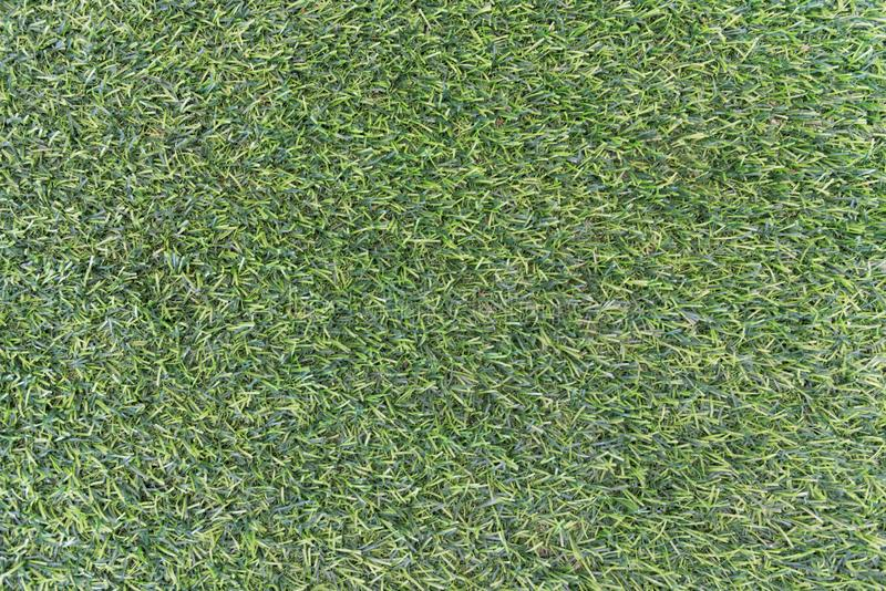Green grass texture background. Nature and wallpaper concept. Outdoors and decoration theme stock photo