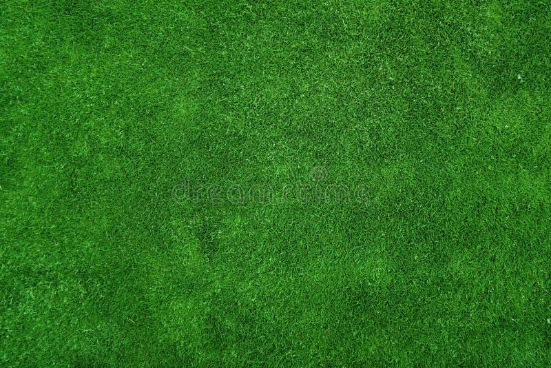 Green Grass Paint