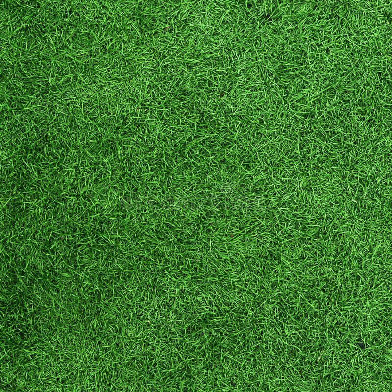 Green grass texture field royalty free stock photography