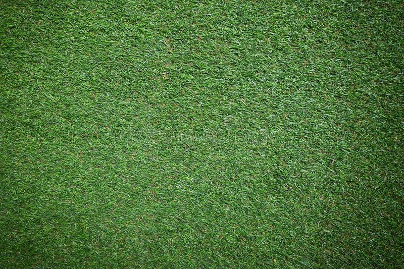 Green grass texture. stock images